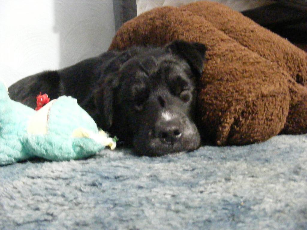 Jasper sound asleep by BlueIvyViolet