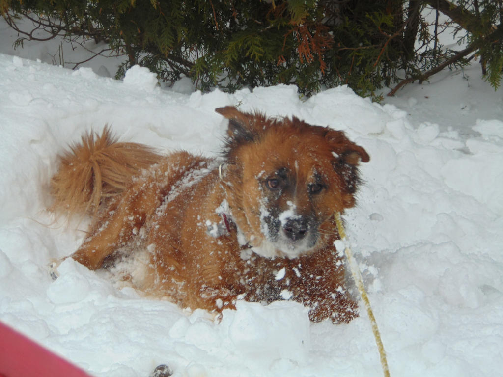Bear having fun in the snow by BlueIvyViolet