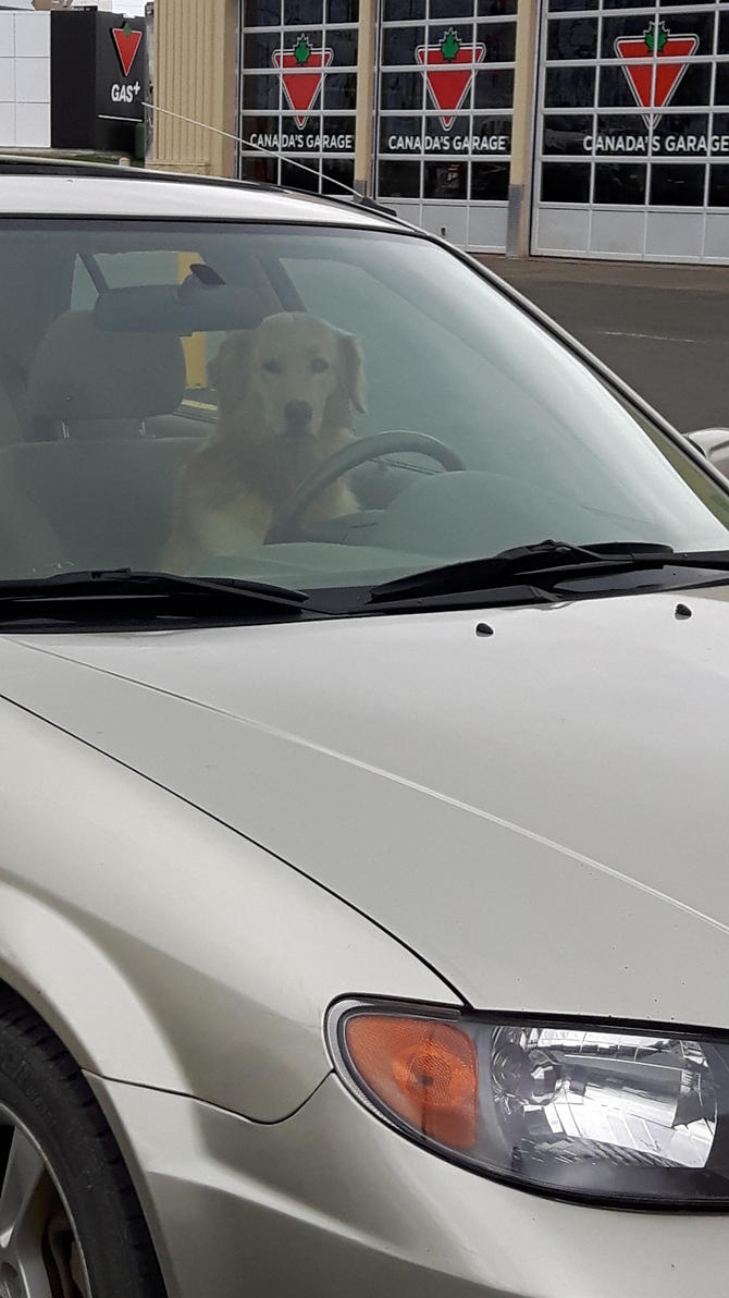 dog driver by BlueIvyViolet