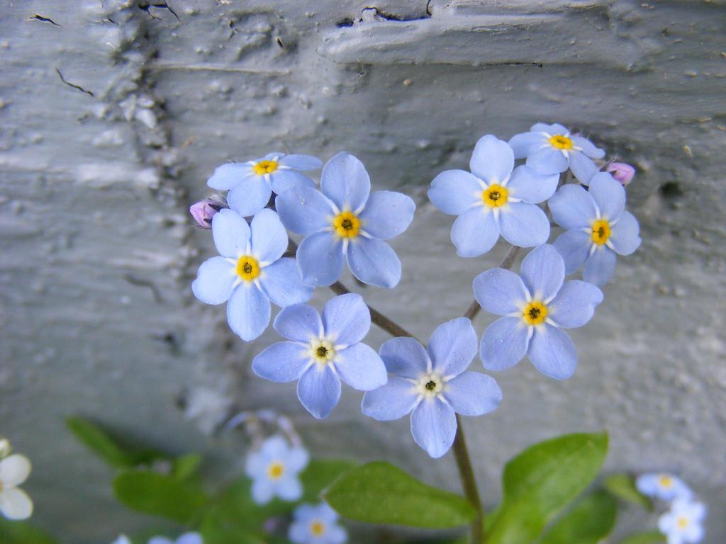 In Sweet Loving Memory.... by BlueIvyViolet