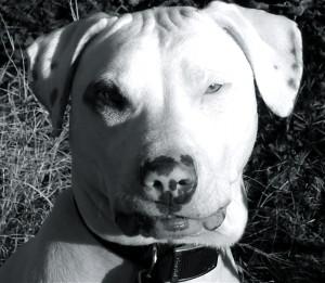 afuttock's Profile Picture