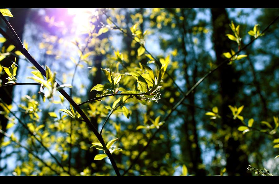 Spring-forest01