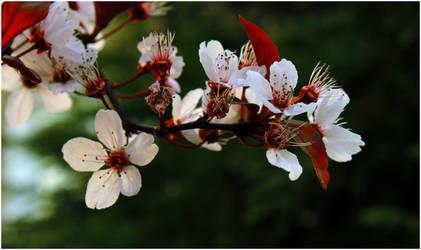 Memorial of spring by AQJack