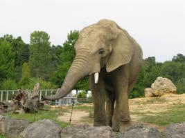 Elephant by Leina1