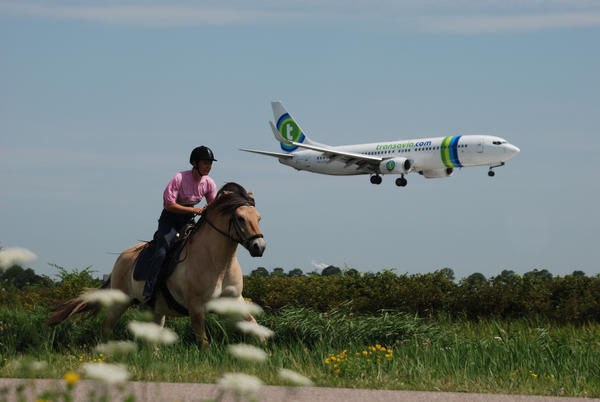 Fjord Horse vs. Airplane