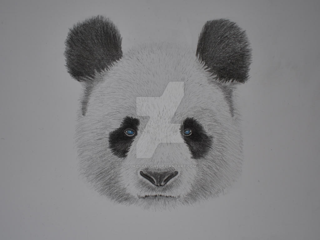 Giant panda graphite pencil drawing by lukehanlon1 on deviantart