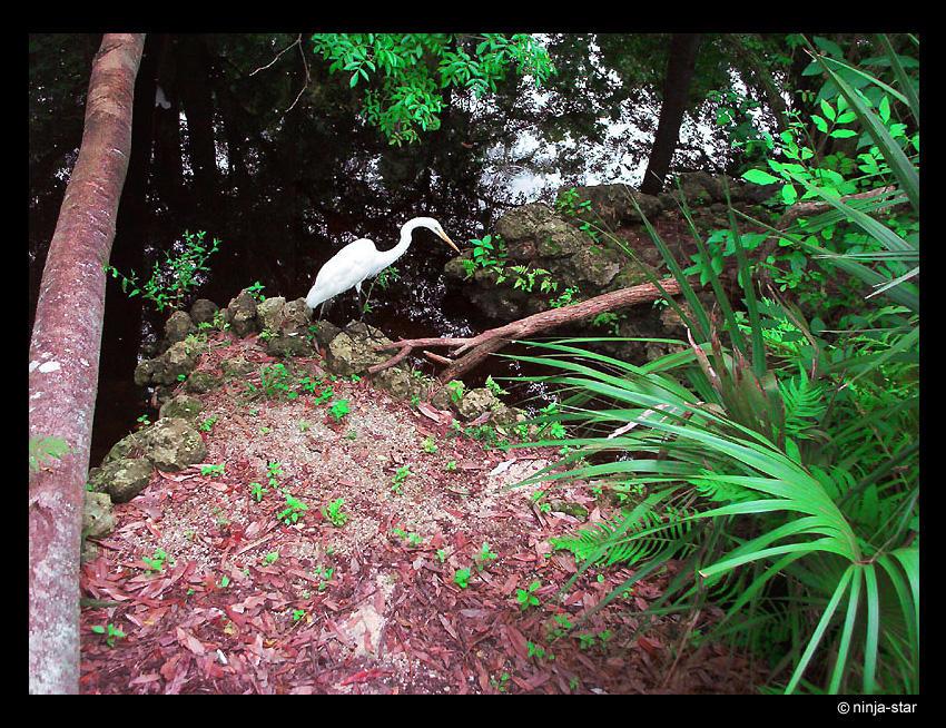 heron by ninja-star