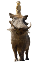 Disney's Timon and Pumba - Transparent!
