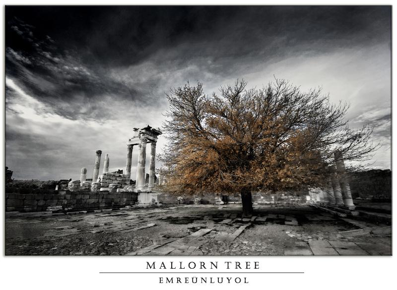 Mallorn Tree by yagmurVII