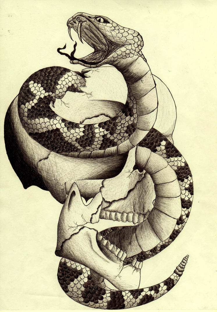 Skull and snake by BasicSilver on DeviantArt