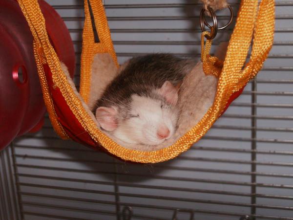 Вязаный гамак для крысы своими руками 78