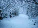 Snowy Lane by malinas