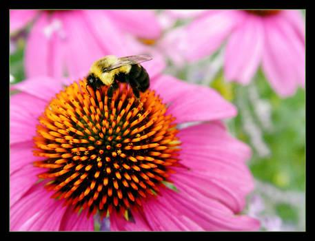 bumblebee planet
