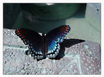Butterfly on the Moon