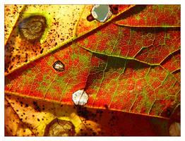 autumn skin 3 by littleredelf