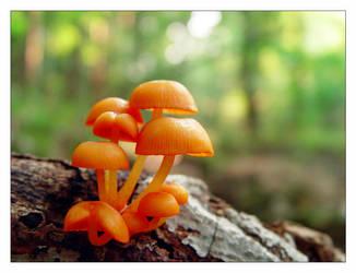 9 orange mushrooms by littleredelf