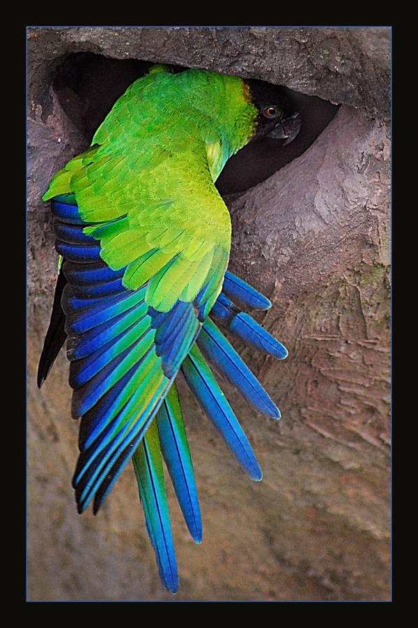 Bird at the zoo by chunydia