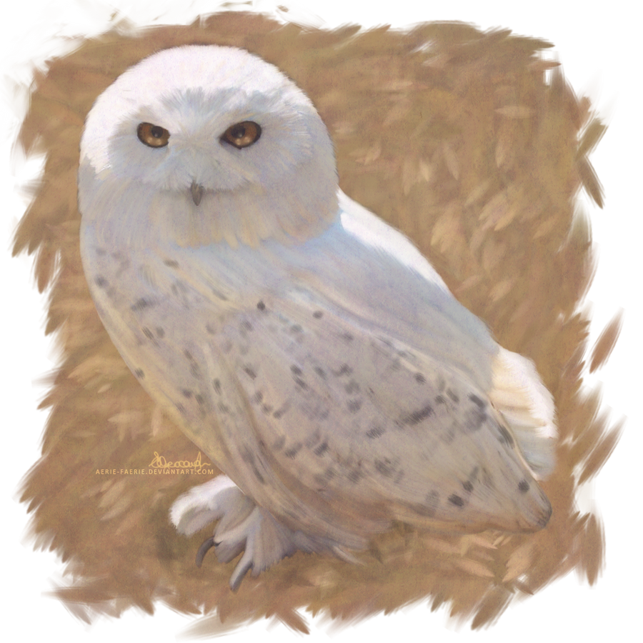 Hedwig Flying Drawing
