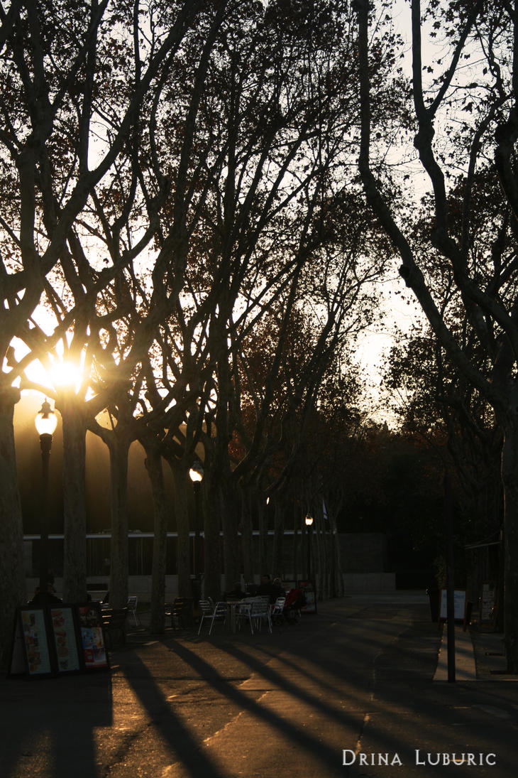 Sun Between The Trees By Drii A7x On Deviantart