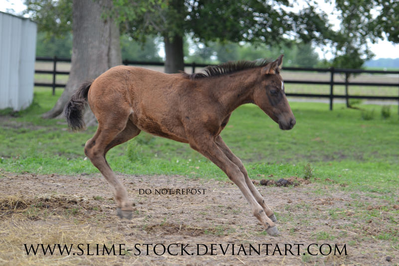 Sept 2015: tb colt bucking by slime-stock