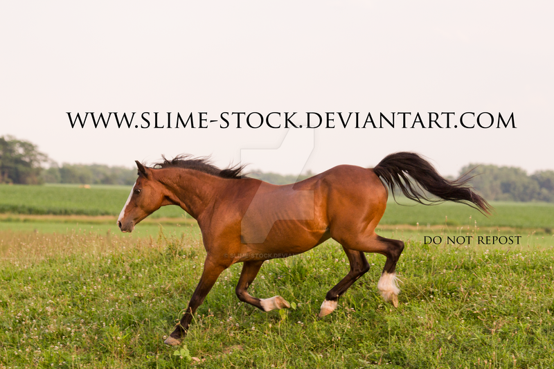 hackney pony extended trot down by slime-stock