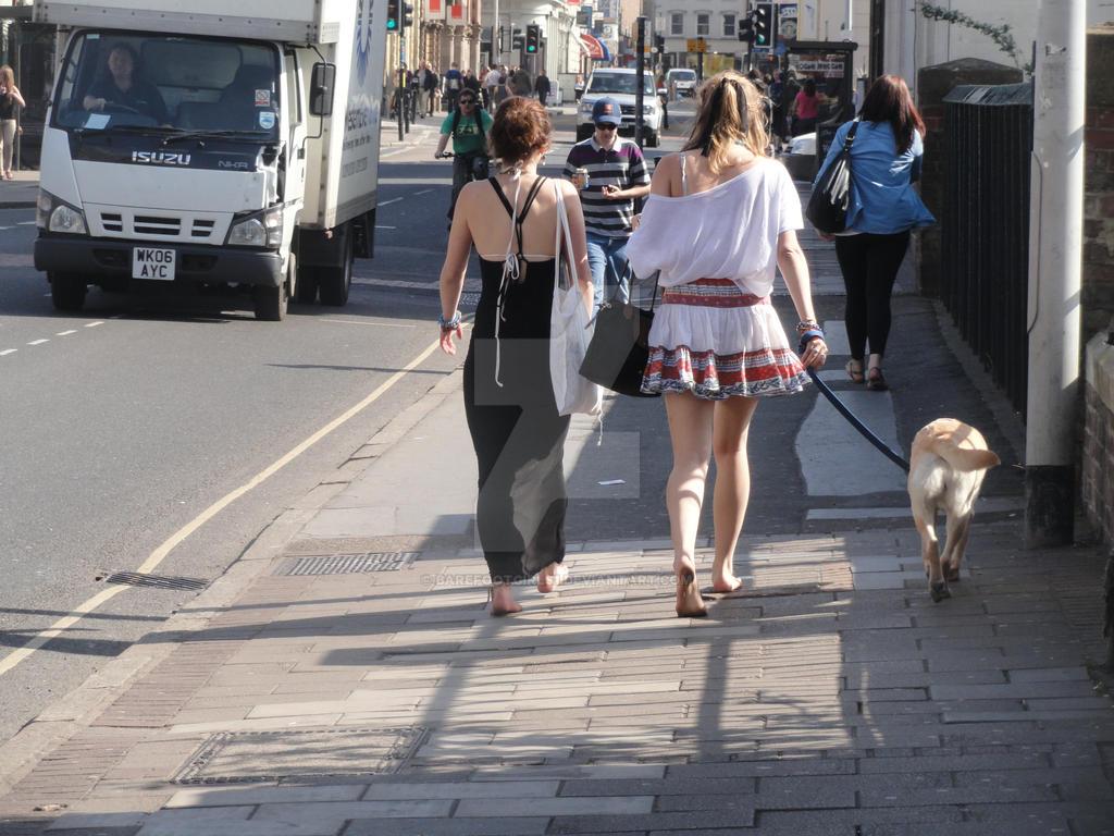 Dog Walking Auckland