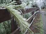 The icestorm of '06.