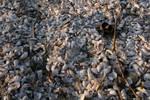 The many shells