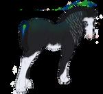 1712 Foal Design