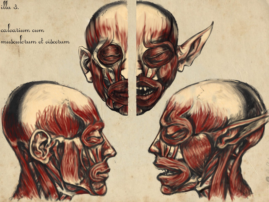 Speculative Anatomy 3 by RedStudioRat