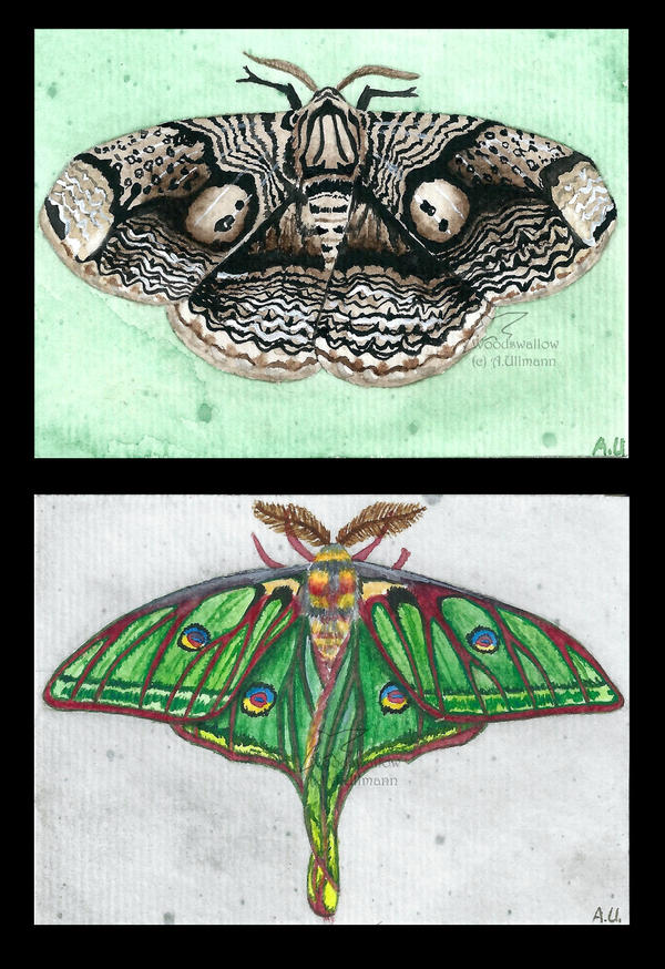 Butterflies of the world - Part 2 by Woodswallow