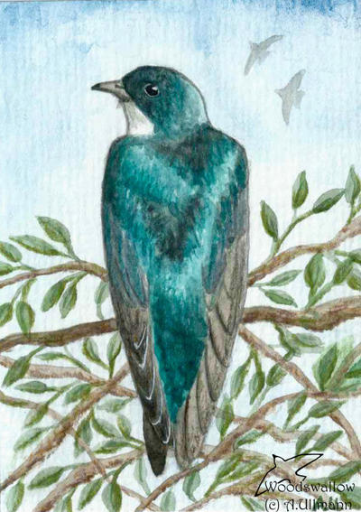 A handful of luck (ACEO) by Woodswallow