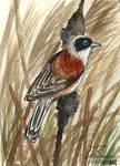 Wind in the reeds (ACEO)