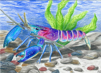 Galaxy Crayfish (ACEO) by Woodswallow
