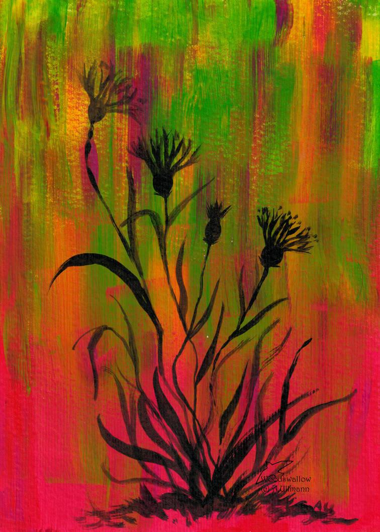 Cornflower by Woodswallow