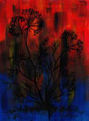 Daucus carota by Woodswallow