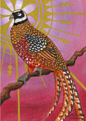 Reeve's pheasant (ACEO) by Woodswallow