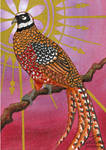 Reeve's pheasant (ACEO)