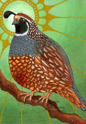 Gambel's quail (ACEO) by Woodswallow