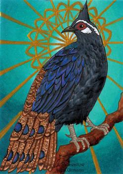 Palawan peacock pheasant (ACEO)