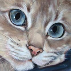 blue eyes by Eline-portraits
