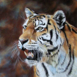 siberian tiger by Eline-portraits