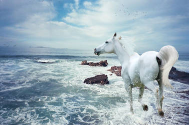 King of the Sea by Horse-Craze77