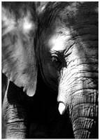 Beautifull Wrinkle by elultimodeseo