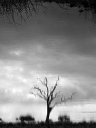 Desolation by elultimodeseo