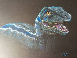 Blue - Jurassic World