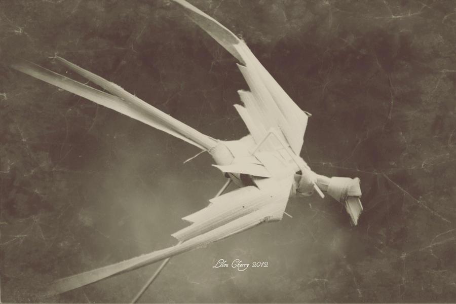 Wings Spread by Cixipod