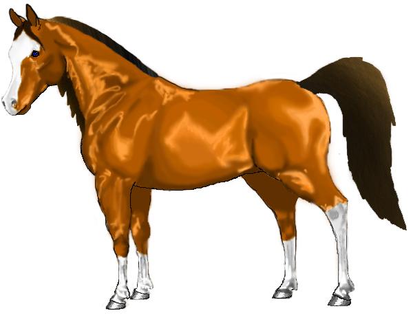 Golden Bay Horse Golden Bay Arabian Horse by