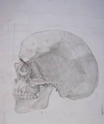 Skully skull