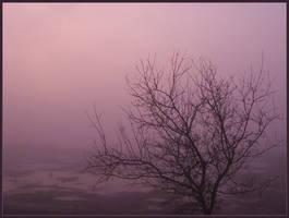Pink mist by TiliaLinden